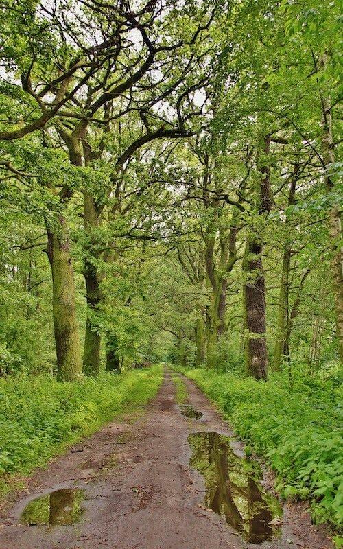 Opienskiego las